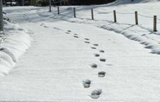 雪の足跡.jpg
